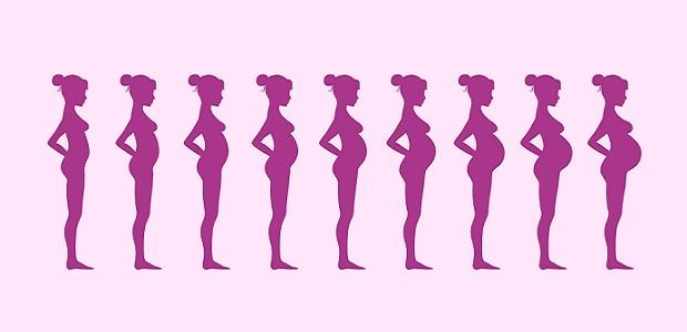 Tamanho da barriga na gravidez mês a mês - Mãe-Me-Quer